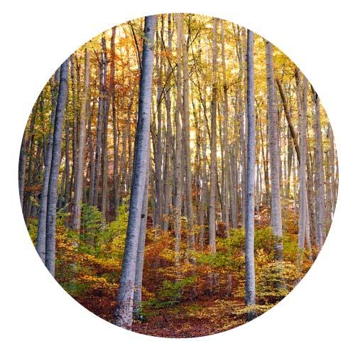 madera ecológica